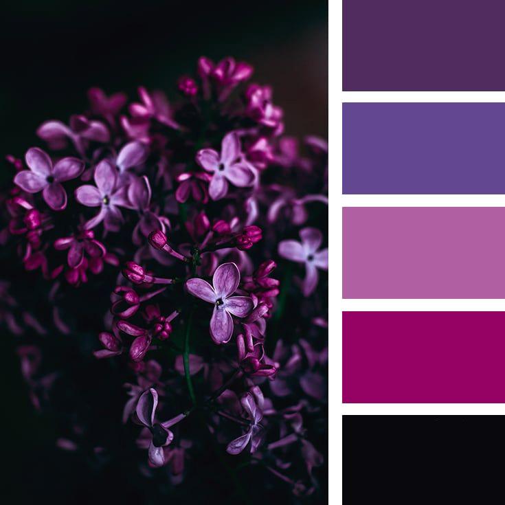 как можно наложить на фотографию фиолетовый цвет три